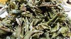 缅甸果敢特区产的老树茶
